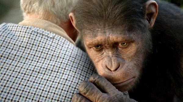 alba-del-pianeta-delle-scimmie-1