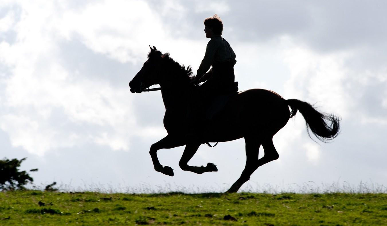 war-horse-2