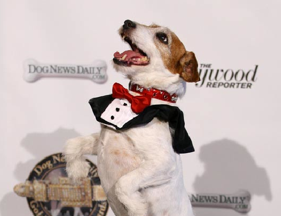 Golden-Collar-Awards-Uggie-02