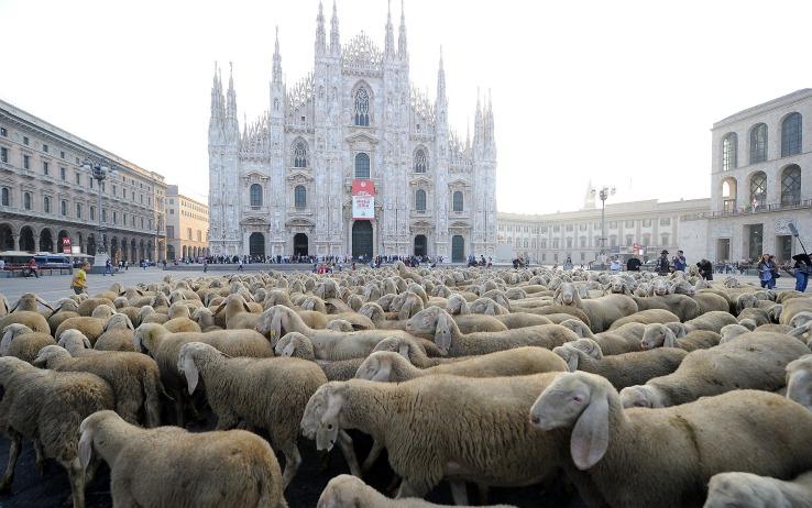 milano_piazza_duomo_pecore